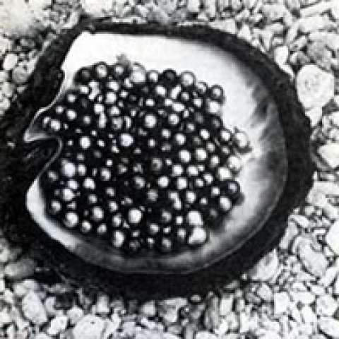 Black pearls produced in Jean-Claude Brouillet's farm in Tahiti