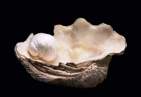 Palawan Princess With The Original Shell In Which It Was Found