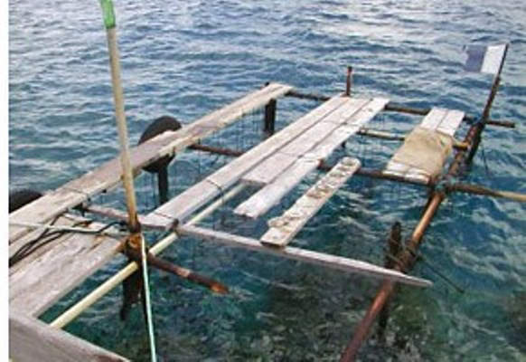 Tahitian Pearl Farms-1
